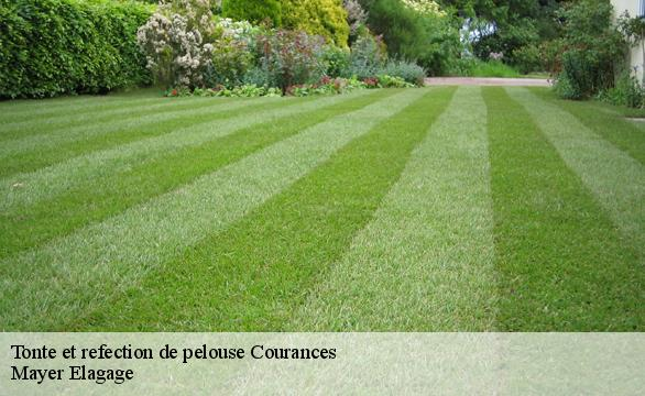 Tonte et refection de pelouse  courances-91490 Mayer Elagage