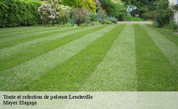 Tonte et refection de pelouse  leudeville-91630