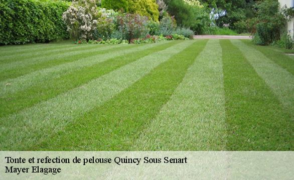 Tonte et refection de pelouse  quincy-sous-senart-91480 Mayer Elagage